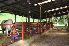 Centaura farm 3aaa